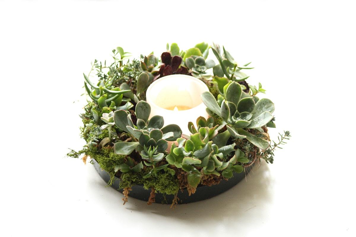 Round succulent centerpiece