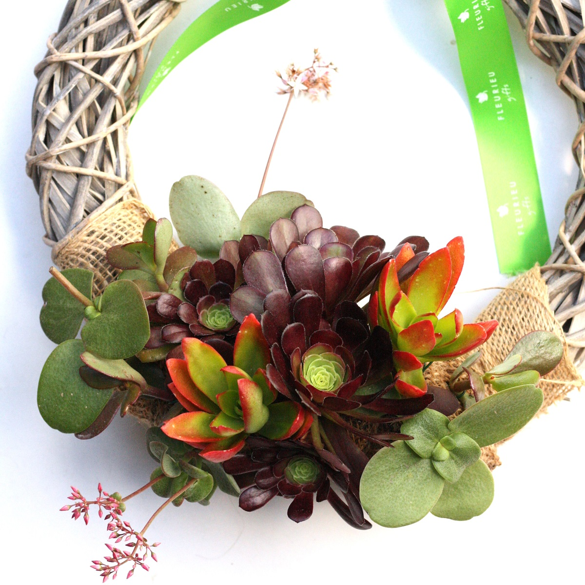 Living Succulent Wreath Fleurieu Gifts