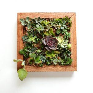 Succulent living garden in frame.
