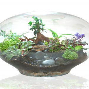 Giant imaginarium terrarium by Fleurieu Gifts