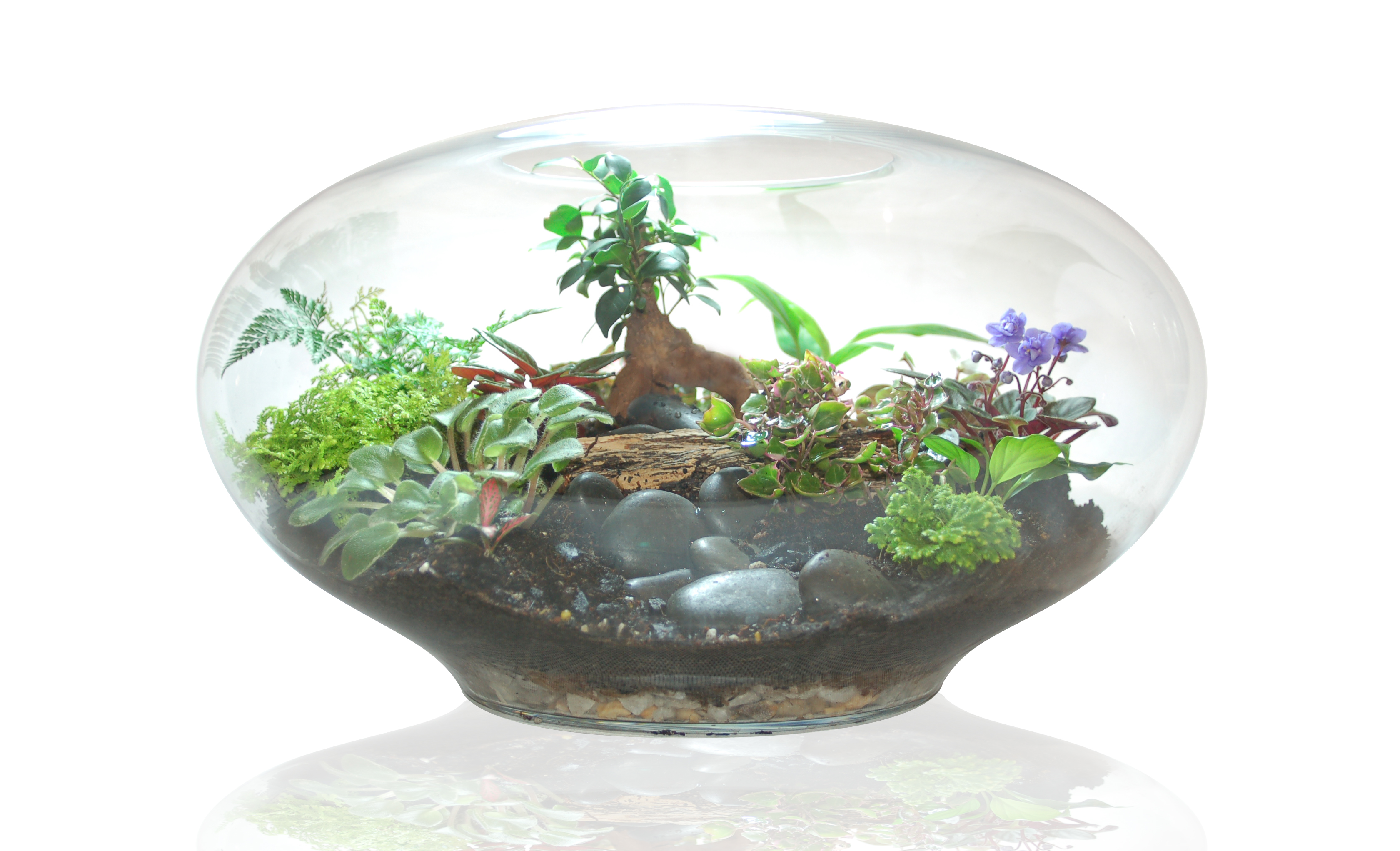 Giant imaginarium terrarium by Fleurieu Gifts
