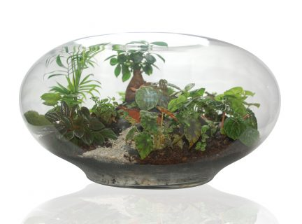 Giant Imaginarium Terrarium by Fleurieu Gifts.