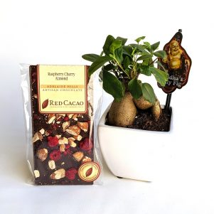 Bonsai and chocolate gift.
