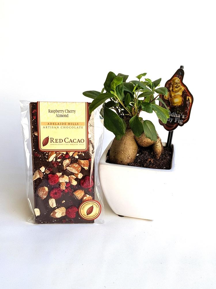 Bonsai and chocolate gift.