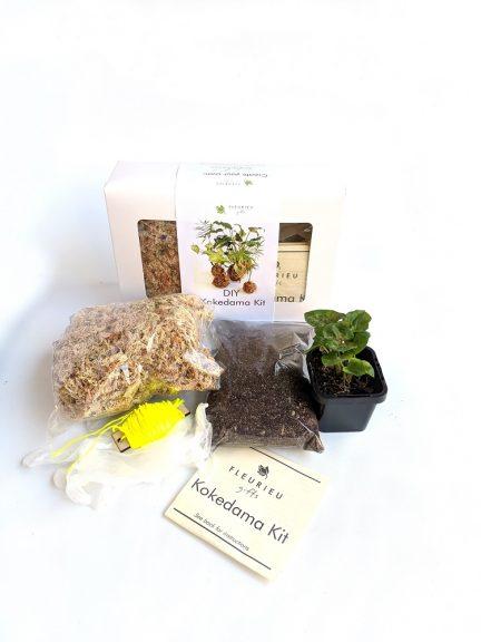 Kokedama kit including indoor plant