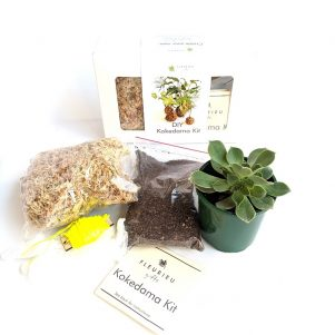 Christmas Succulent Arrangement.Succulent And Cacti Gifts Fleurieu Gifts