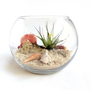 a terrarium featuring sand, an airplant, shells and preserved moss