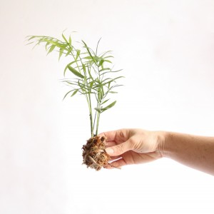 Kokedama instructions 7_WEB