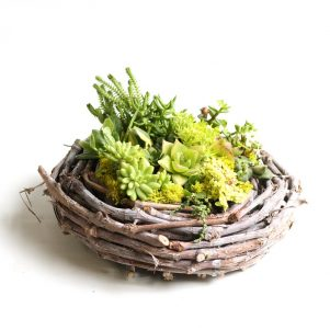 Succulent Nest planter