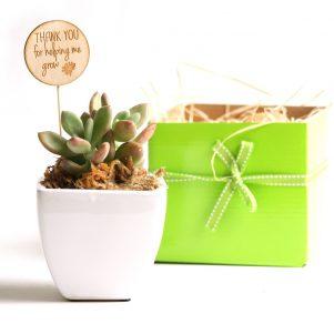 Succulent Teacher's Gift