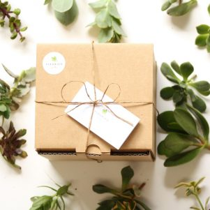 Succulent Cuttings Gift Box