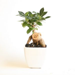 Little Bonsai Love Tree