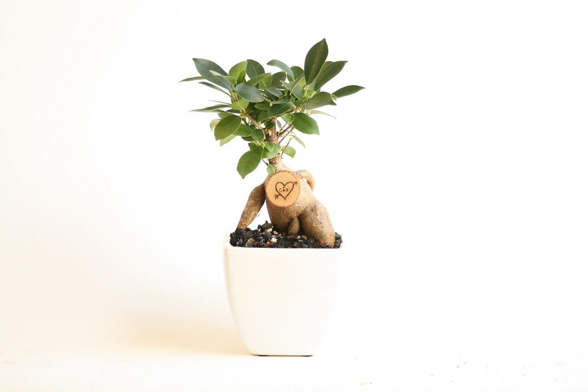 Little Bonsai Love Tree