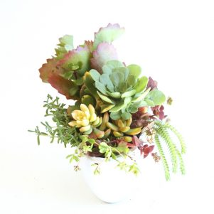 Christmas Succulent Centerpieces.Succulent And Cacti Gifts Fleurieu Gifts