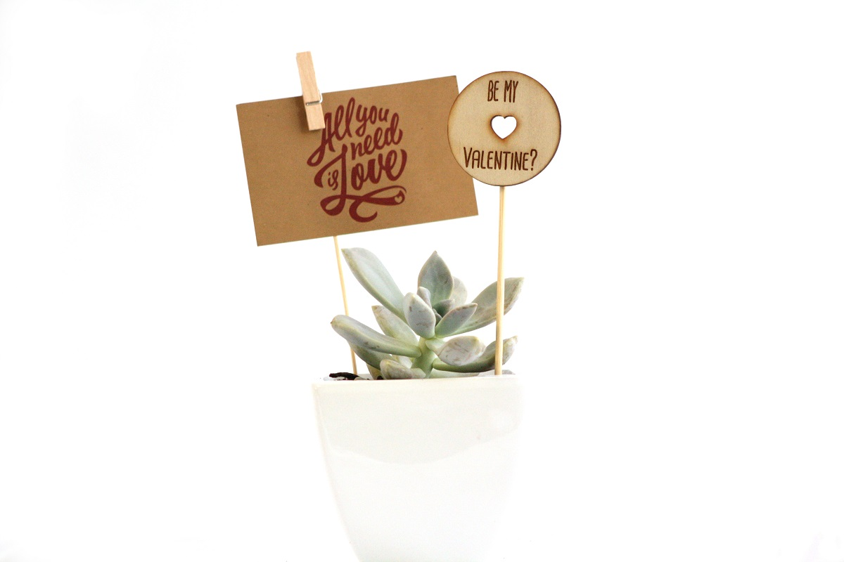 Valentine's Day Succulent Gift