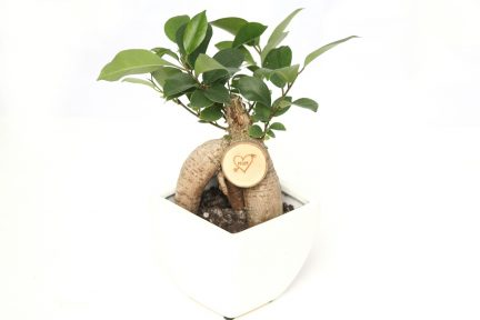 Bonsai Mother's Day Gift