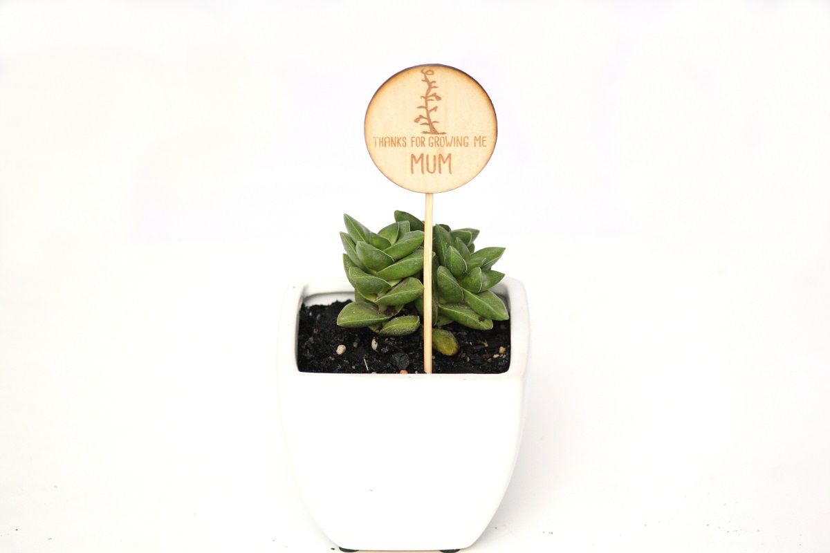 Mother's Day Succulent Gift