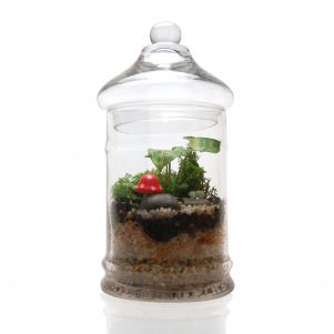 Candy Jar Terrarium with small toadstool.
