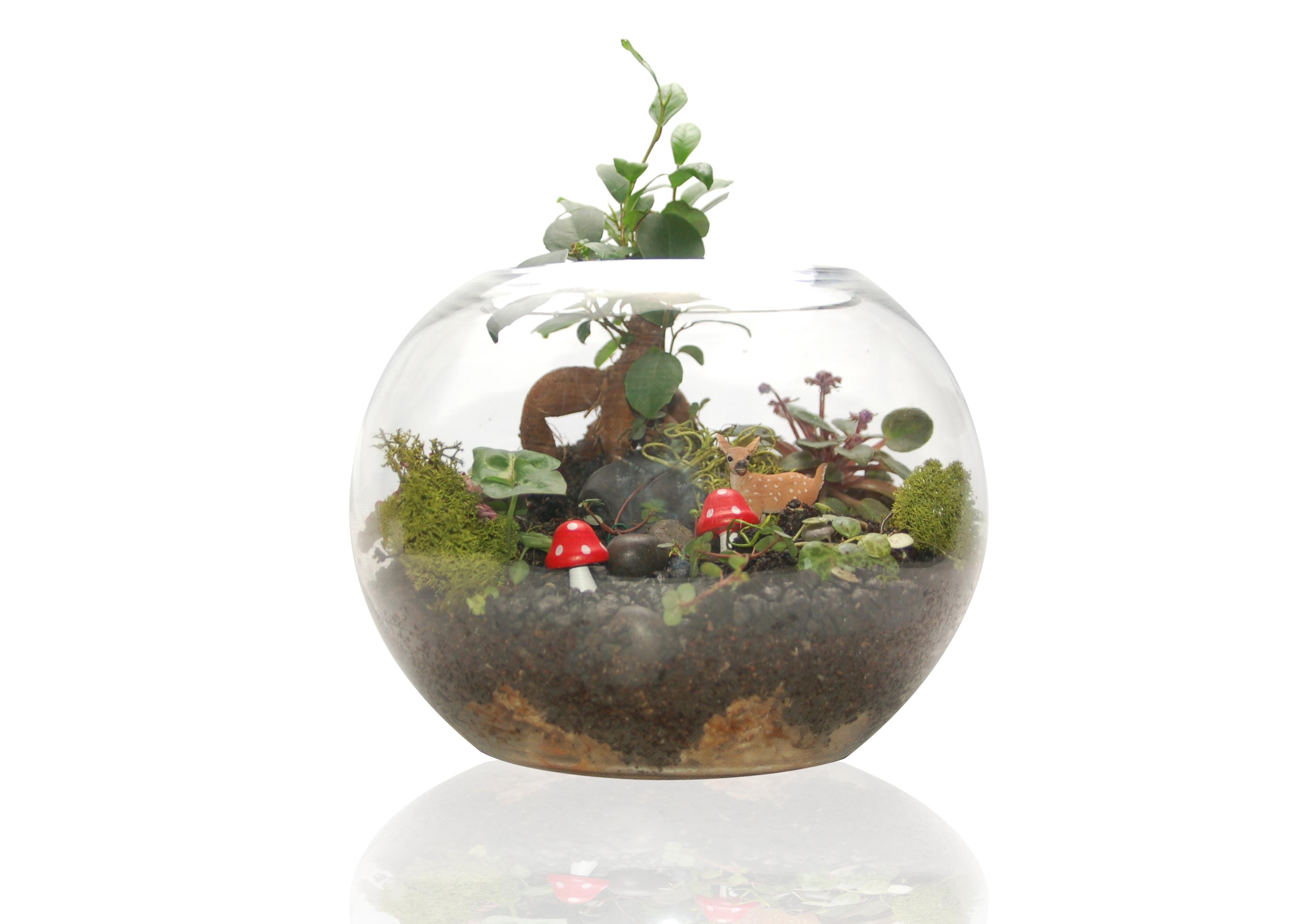 Large Sphere Terrarium Fleurieu Gifts