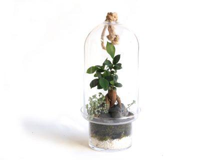 The Bonsai Capsule terrarium.