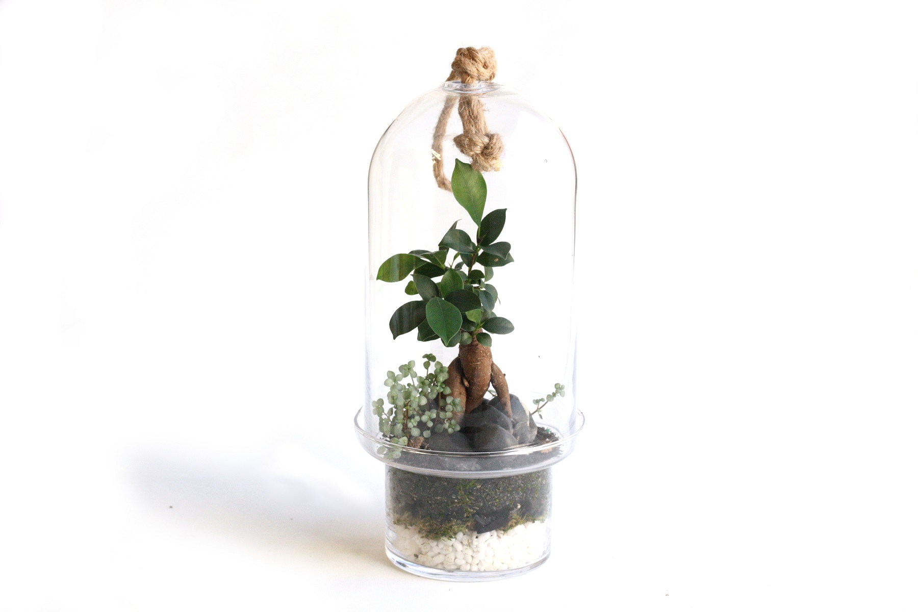 The Bonsai Capsule terrarium.