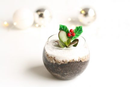 Succulent Christmas Pudding plant