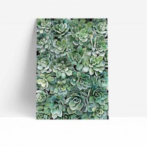 Succulent Wall Print