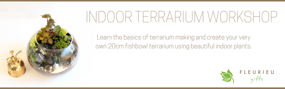 Indoor Terrarium Workshop