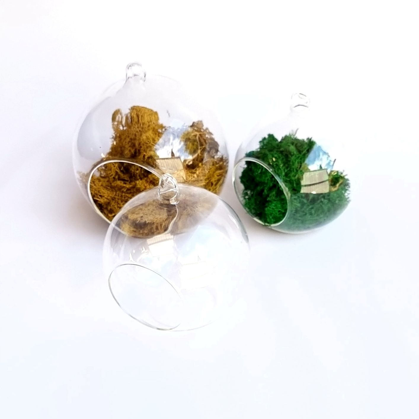 Glass bubble terrariums in two sizes