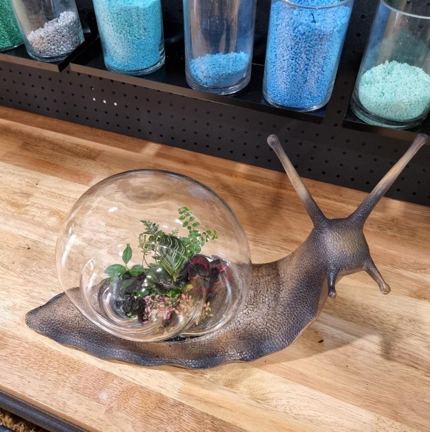 snail shaped terrarium
