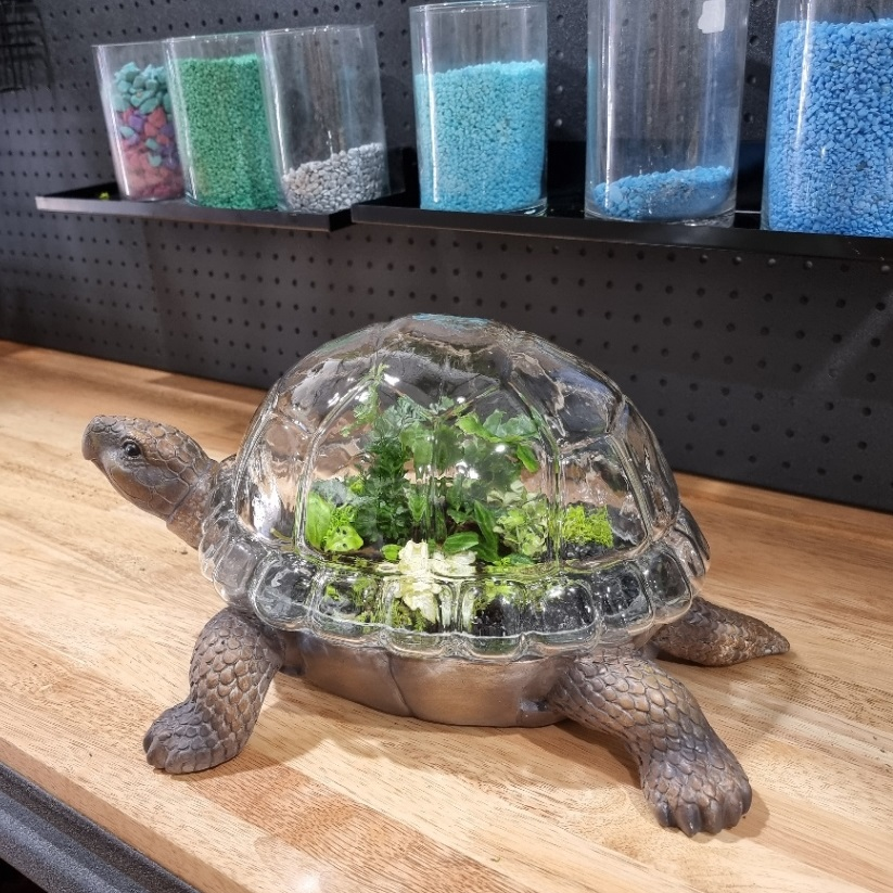 Turtle shaped terrarium