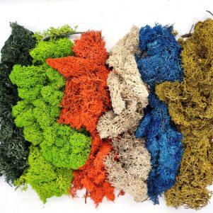 Terrarium Supplies & Preserved Moss