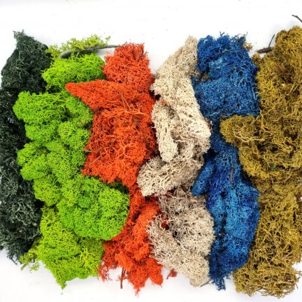 Preserved reindeer moss, loose, in various colours